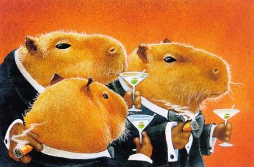 capybara-sandra-simond.jpg