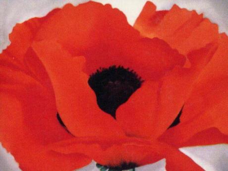 georgia-okeefe-red-poppies.jpg