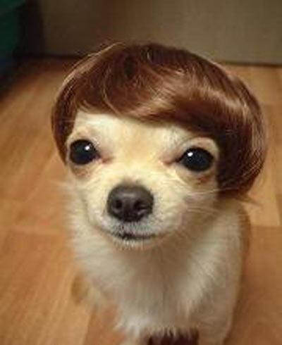 hair-do.jpg